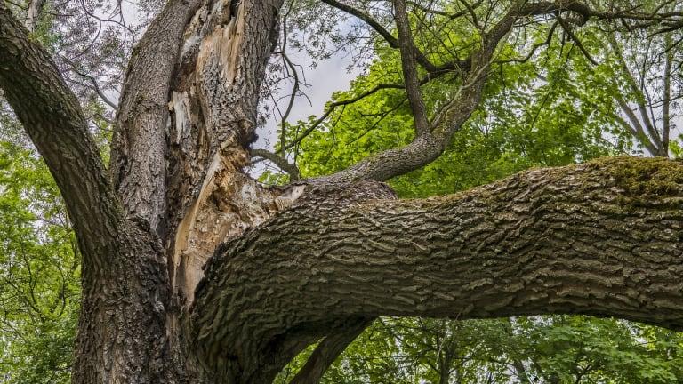 Branche cassée