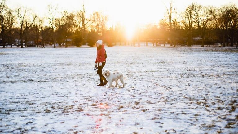 Femme qui marche dans un parc avec son chien