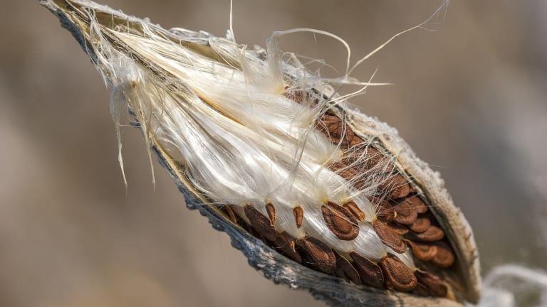 L'été achève, c'est le moment de récolter et préparer mes semences!