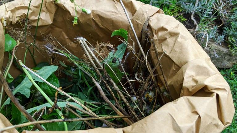 Collecte des résidus verts le mercredi dans Ville-Marie au printemps et à l'automne