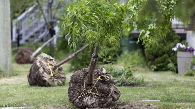Plantation d'arbre dans le secteur ASLP de MHM