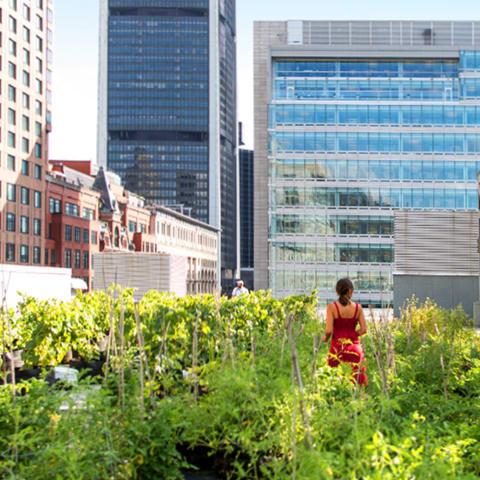 Femme debout sur un toit vert