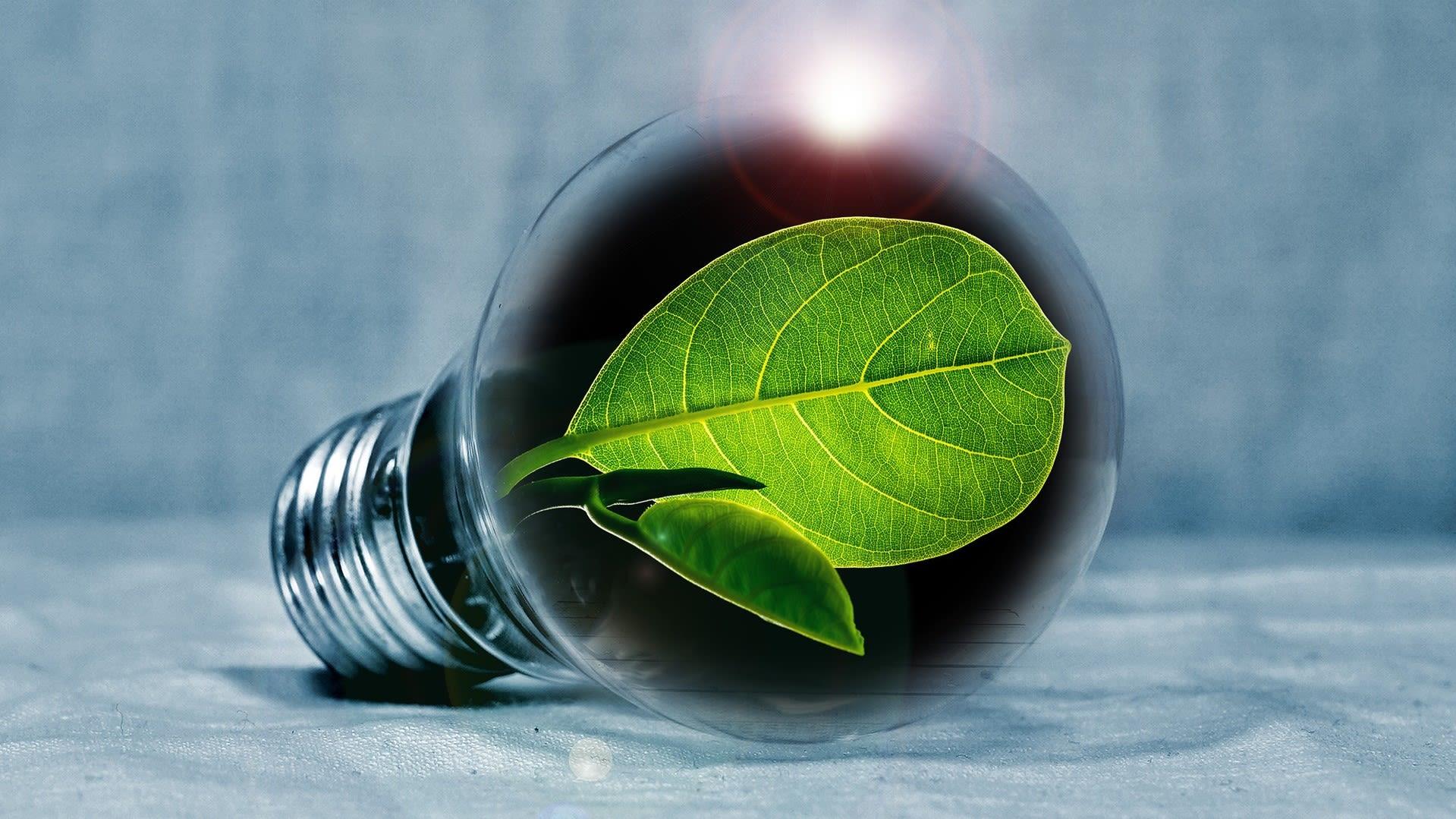 Photo d'une ampoule avec une pousse verte à l'intérieur