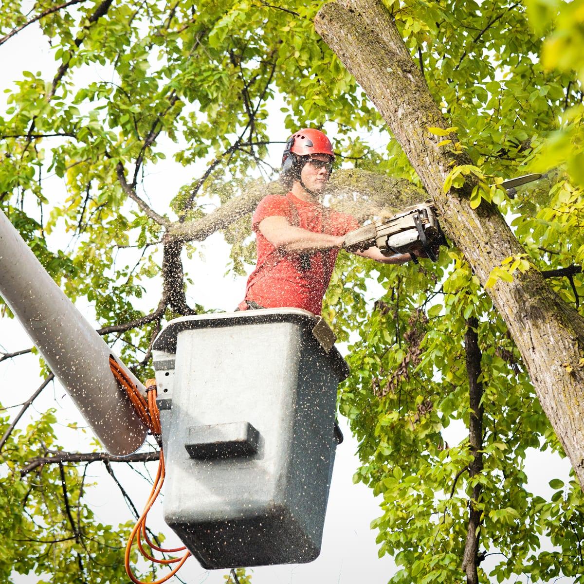 MHM - Permis abattage d'arbres