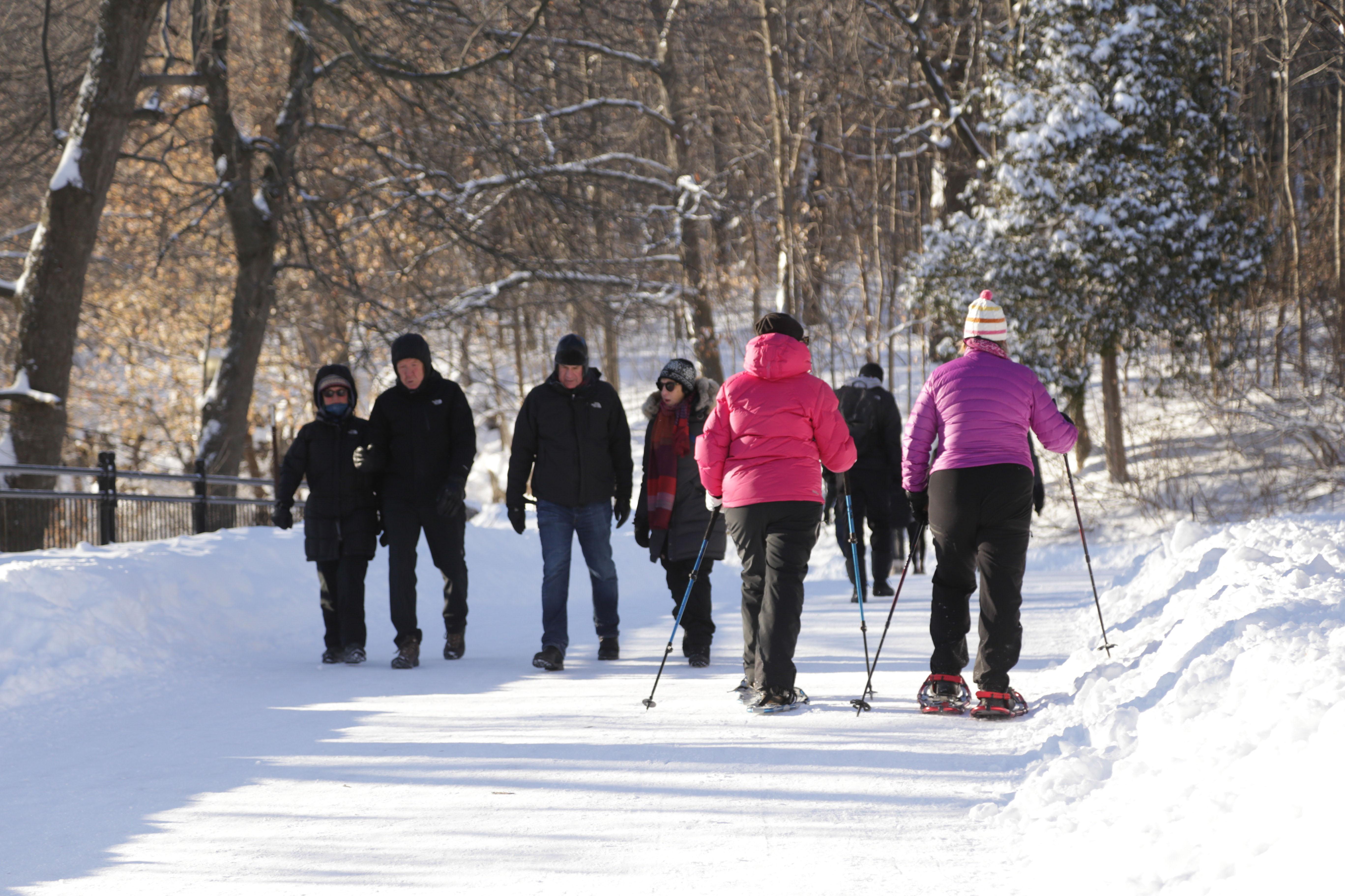 Randonnées en raquettes au parc du Mont-Royal Joudy HIlal