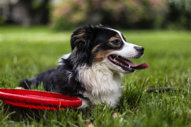 Awesome Pet Gadgets Every Pet Owner Need to Explore