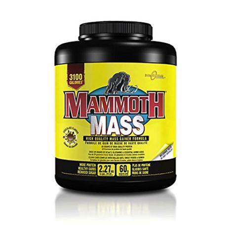 Mammoth Mass - 2267g - Schokolade