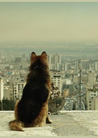 流れ犬パアト