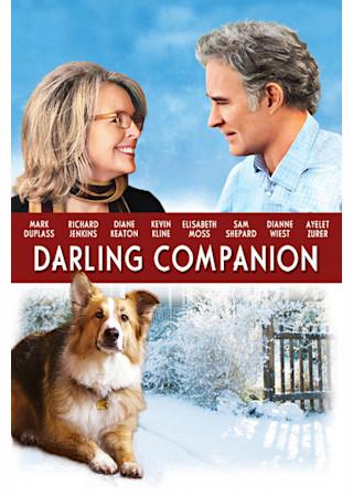 犬と私とダンナのカンケイ