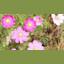 yoda19611961