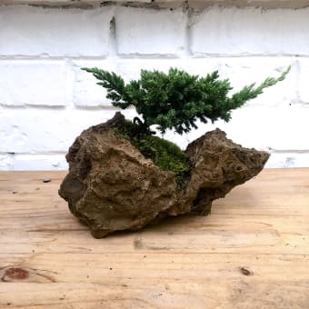 bonsai de piedra natural