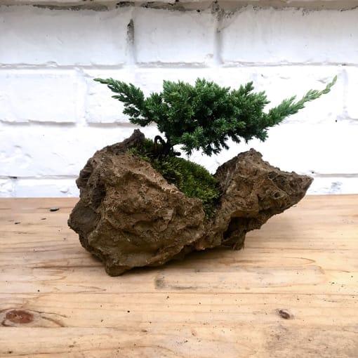 bonsai de piedra natural
