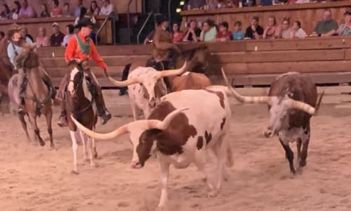 Longhorns at Dolly Parton's Stampede Dinner Show Pigoen Forge