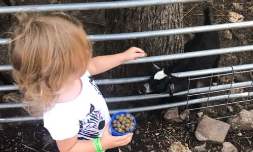 Feeding Goats near Dolly Parton's Stampede Dinner and Show Branson