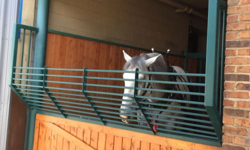 Horse in a Stable near the Black Fox Lodge Pigeon Forge