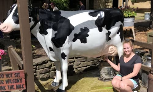 Milking a Cow at Silver Dollar City