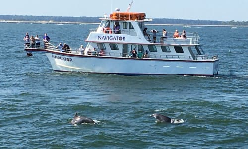 Dolphins on the Myrtle Beach Dolphin Sightseeing Cruises
