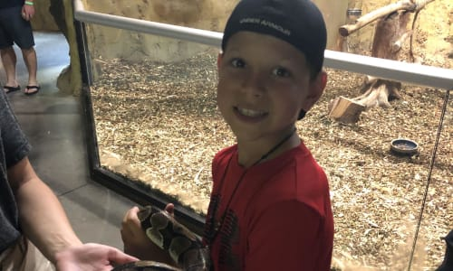 Interact with Snakes at the RainForest Adventures Discovery Zoo
