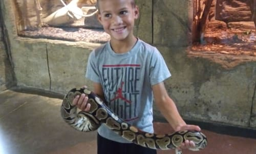 Holding a Snake at RainForest Adventures Discovery Zoo