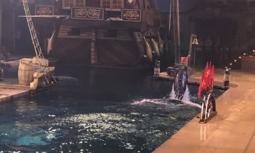 Wildlife at Pirates Voyage Dinner and Show
