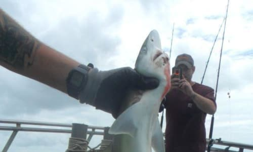Catching Sharks with Myrtle Beach Deep Sea Fishing