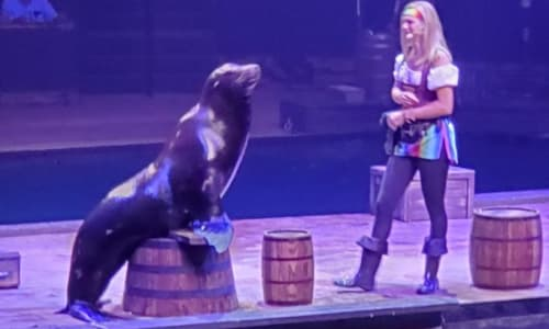 Seal on a Barrel with Pirates Voyage Dinner and Show Pigeon Forge