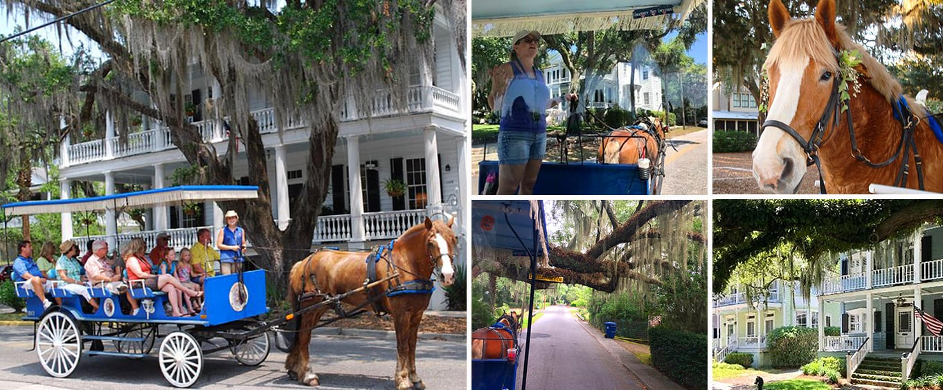 #1 Historical Horse Drawn Carriage Tour