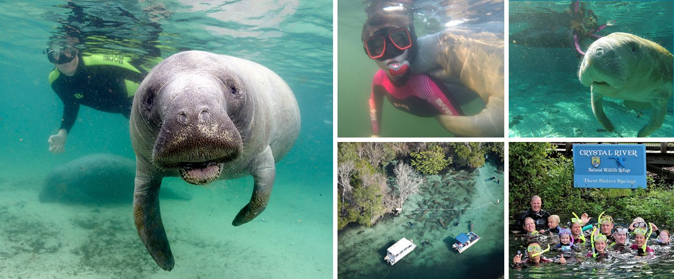 Snorkel Swim with Manatees Tour