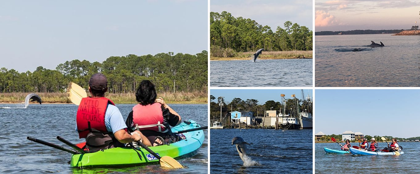 Dolphins and Wildlife Kayak Experience from Gulf Shores
