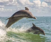 Cape May Weekend Dolphin Watching Breakfast Cruise