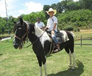 Gold Rush Stables Pigeon Forge Horseback Rides