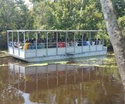 On the Cajun Lady with the Cajun Pride Swamp Boat Tour