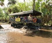 The Buggy for Billie Swamp Safari Buggy Tour, Airboat Ride and Reptile Show