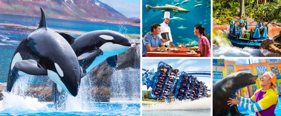 Family Fun at SeaWorld Orlando