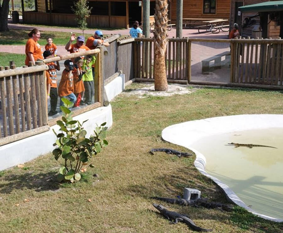 Baby Gators with the Boggy Creek Daytime Airboat Ride