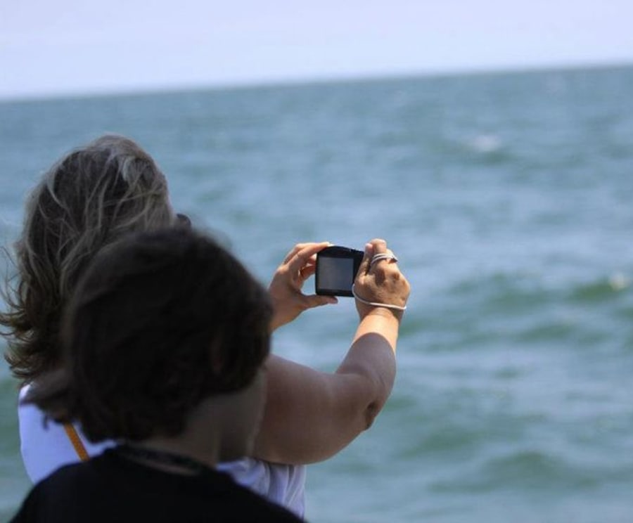 Take Pictures on the Atlantic City Dolphin Watching Cruise