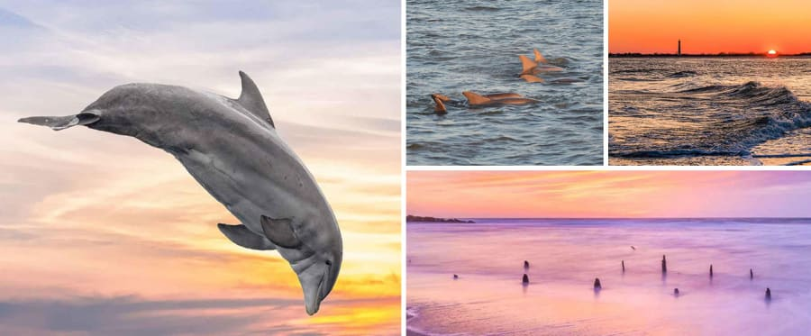 Cape May Island Sunset Cruise & Dolphin Watching Collage