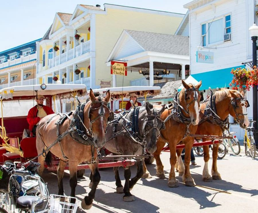 Horses with the Mackinac Island Carriage Tours