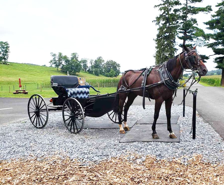 Horse and Buggie on the Lancaster Downtown & Amish Country Authentic Lancaster Tour