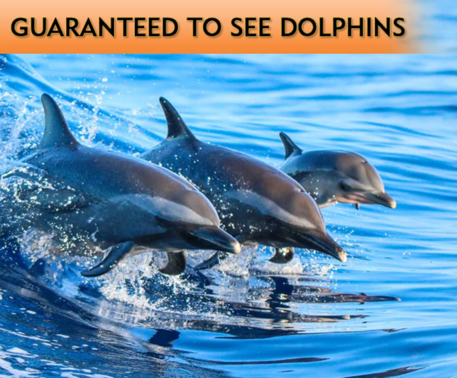 Myrtle Beach Dolphin Sightseeing Cruises & Tours