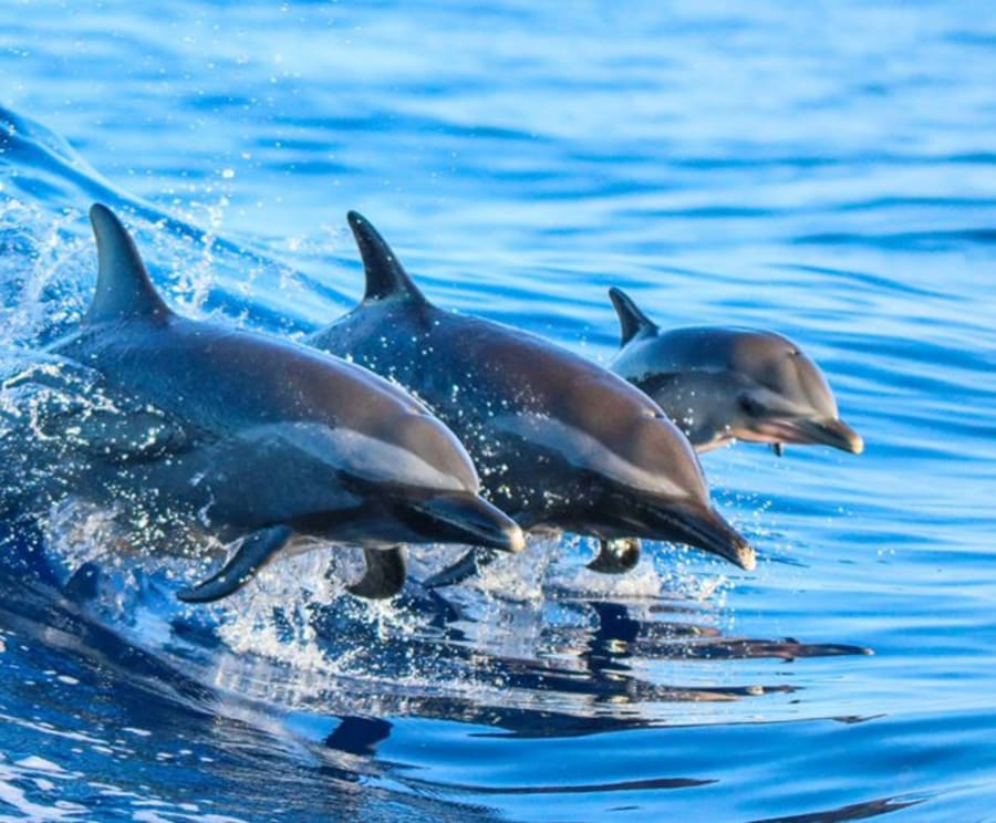 Amazing Dolphins on the Myrtle Beach Dolphin Sightseeing Cruises