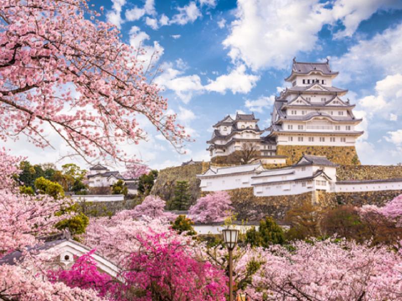 MÙA HOA TUYẾT TOKYO - HAKONE - PHÚ SỸ - OSAKA - KYOTO - KOBE MÙNG 2 TẾT 2020