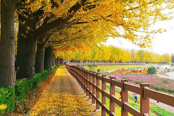 Trải Nghiệm mùa thu Hàn Quốc SEOUL – ĐẢO NAMI – EVERLAND