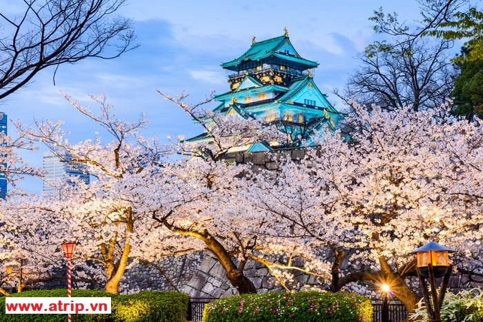 Du lịch hè Nhật Bản - Xứ Sở Hoa Anh Đào