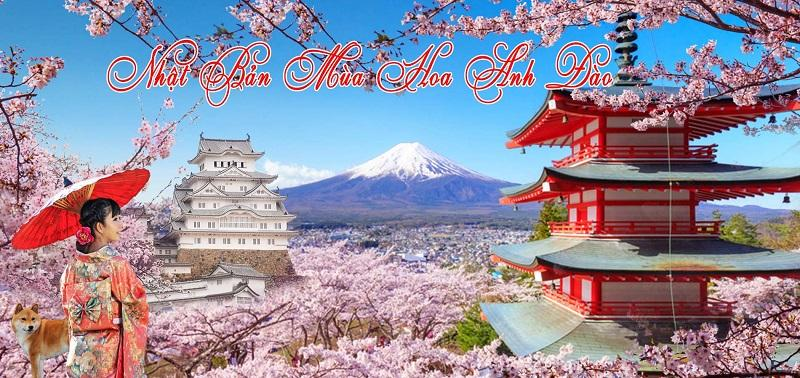 KHÁM PHÁ XỨ SỞ PHÙ TANG KANSAI - KYOTO - OSAKA - SHIZUOKA - NARITA 6N5Đ