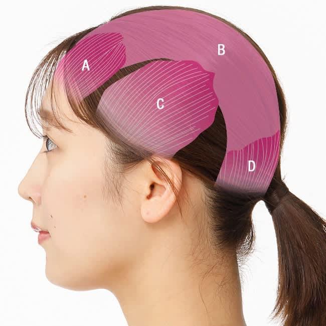 前頭筋(ぜんとうきん)、帽状腱膜(ぼうじょうけんまく)、側頭筋(そくとうきん)、後頭筋(こうとうきん)