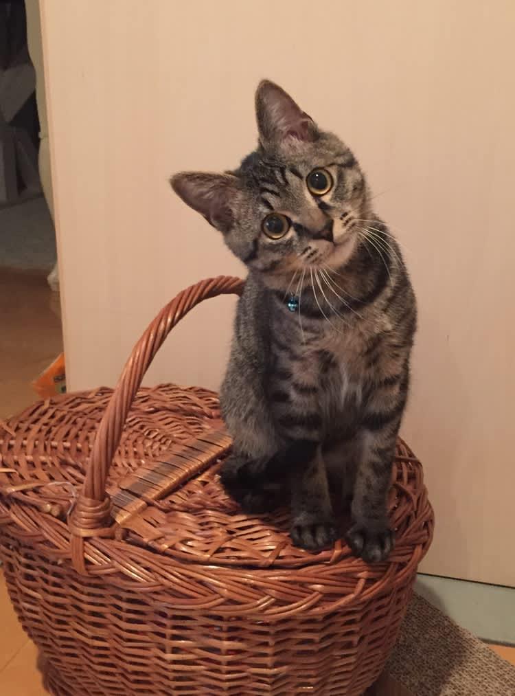 グリ,ネコ,猫,新井ミホ