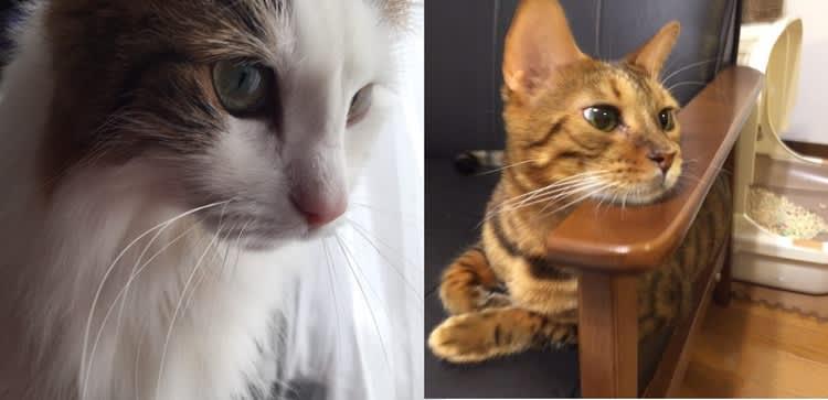 芽衣,恭介,宮田聡子,ネコ,猫