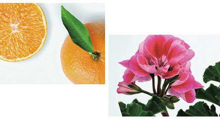 イタリア産マンダリンオレンジ果皮油とニオイテンジクアオイ油