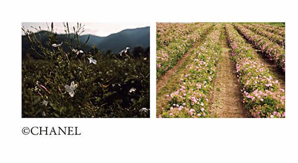 花畑【GRASSE】